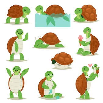 Turtle  cartoon seaturtle character swimming in sea and sleeping tortoise in tortoise-shell illustration set of reptile hiding in turtle-shell  on white background