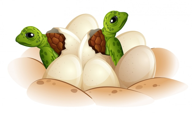 Turtle hatching the egg