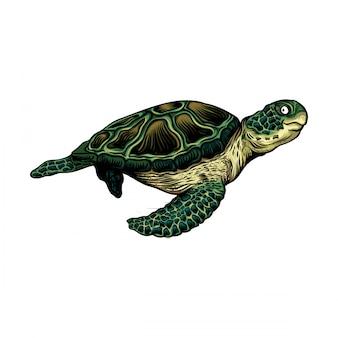 거북이 그림