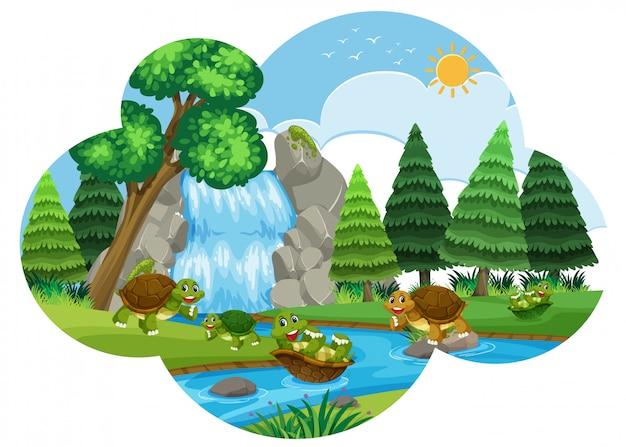 Turtle playing in waterfall scene