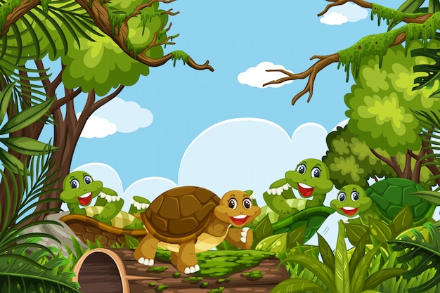 Turtles in jungle