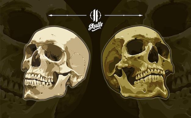 어두운 배경에 두 개의 해부학적인 상세한 벡터 두개골입니다. 현실적인 해골 삽화입니다. eps10 벡터 그래픽입니다.