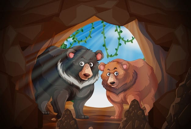Two bears in a cave