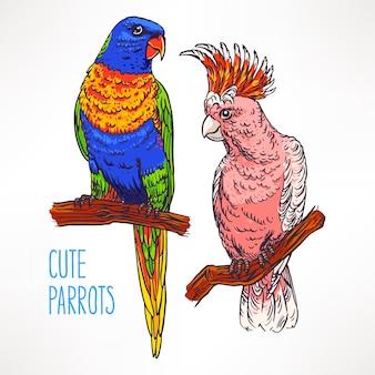 두 아름 다운 이국적인 다채로운 앵무새. 손으로 그린 그림