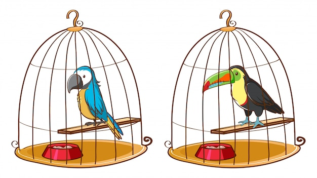 Two birds in bird cages