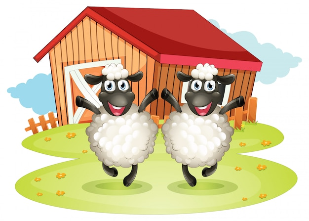 Two black sheep with a barn
