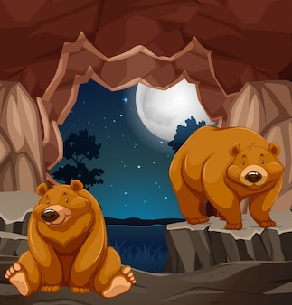 Two brown bears in cave