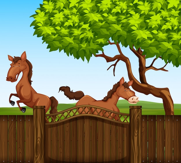Two brown horse in the field