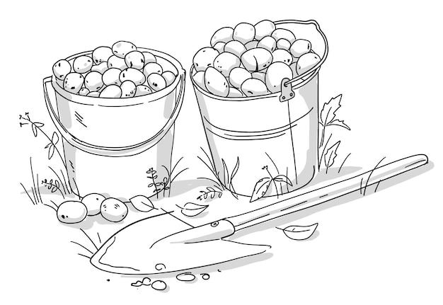 ジャガイモ塊茎の2つのバケツとシャベル。秋の野菜の収穫。
