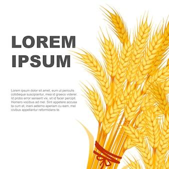 Два пучка пшеницы дизайн баннера с местом для текста плоский векторные иллюстрации на белом фоне.