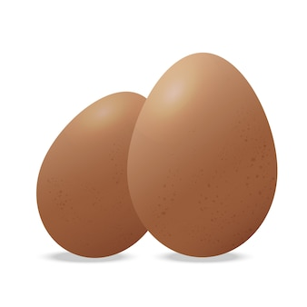 Two chicken eggs vector