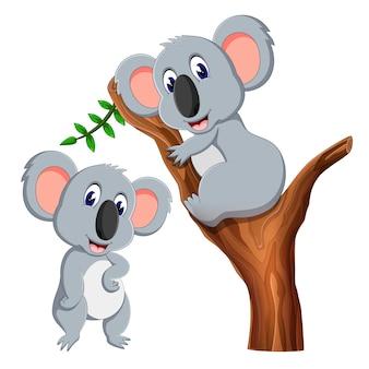 Два симпатичных мультфильма коала