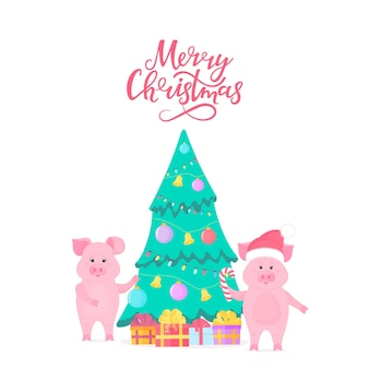 Two cute pigs decorate the fir tree for the new year 2019. merry christmas hand lettering. piglet in santa claus hat with candy cane. gift boxes