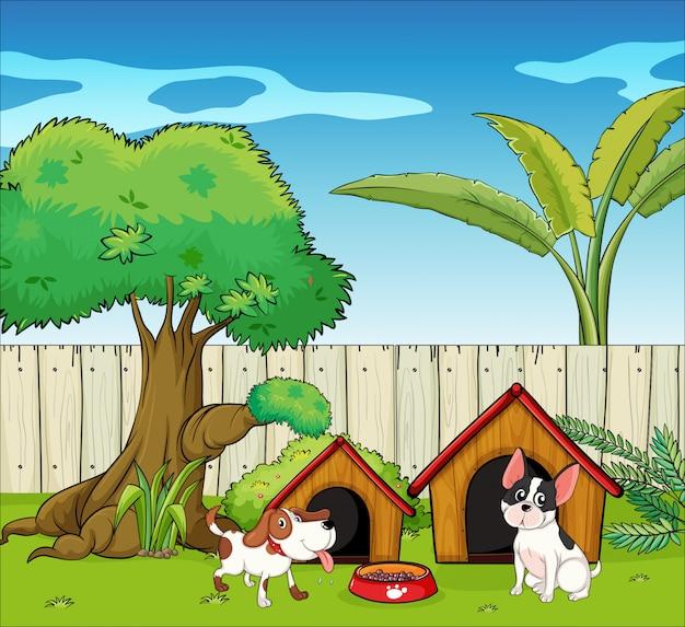フェンスの中の2匹の犬