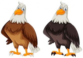 Two eagles with brown and black feather