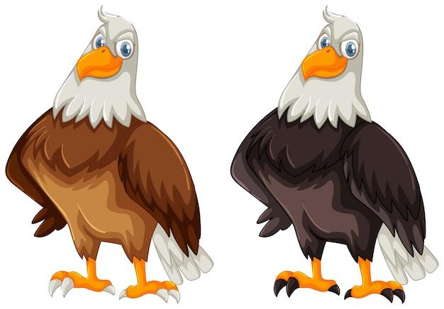 茶色と黒色の羽毛を持つ2本のワシ