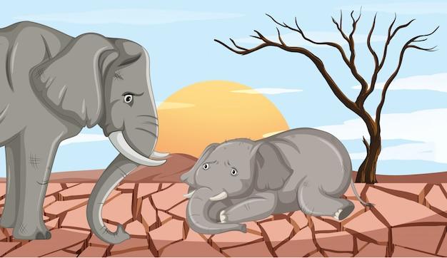干ばつの土地で死ぬ二頭のゾウ