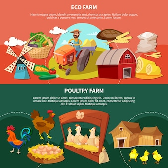 Two farm colored cartoon banner set with eco and poultry farm descriptions illustration