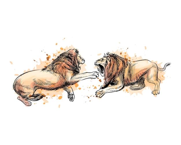 水彩のスプラッシュから2つの戦いのライオン、手描きのスケッチ。塗料のイラスト