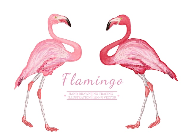 Two flamingo, hand drawn vectorized illustration
