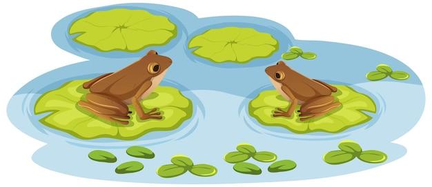 Две лягушки на листьях лотоса в воде