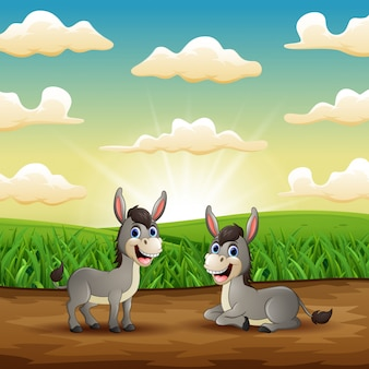 Two funny donkey smiling in the field