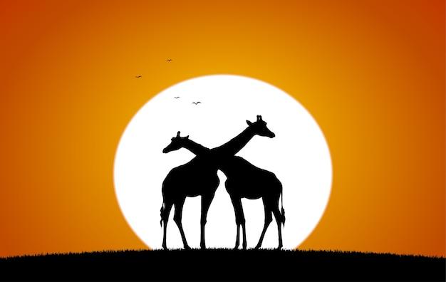 Два жирафа на фоне заходящего солнца. силуэт