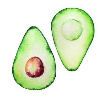 Two halves watercolor avocado with bone