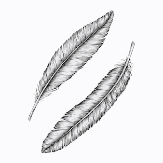 Two hand drawn feathers vector