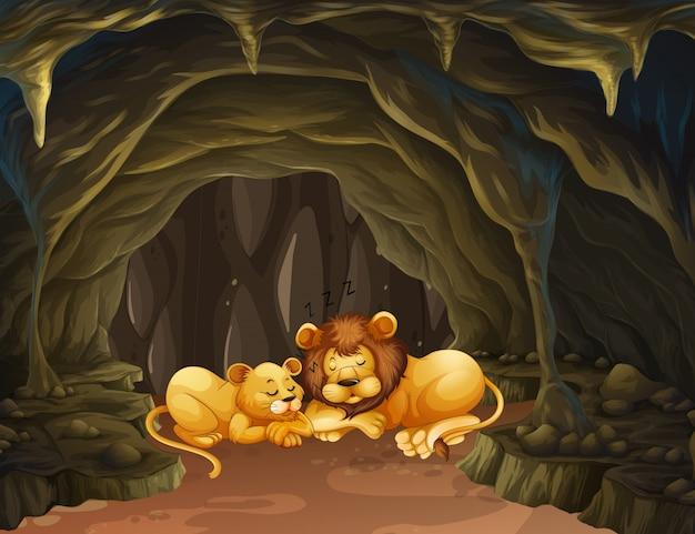 洞窟で寝ている二人のライオン