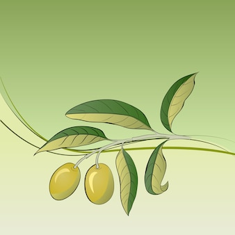 Two olives on branch.