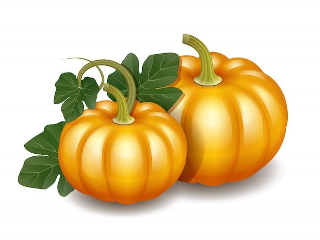 緑の葉、収穫感謝祭のシンボルと2つのオレンジ色の秋カボチャ。図
