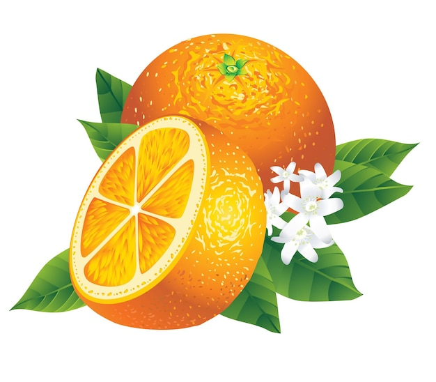 Two oranges with leaves isolated on white