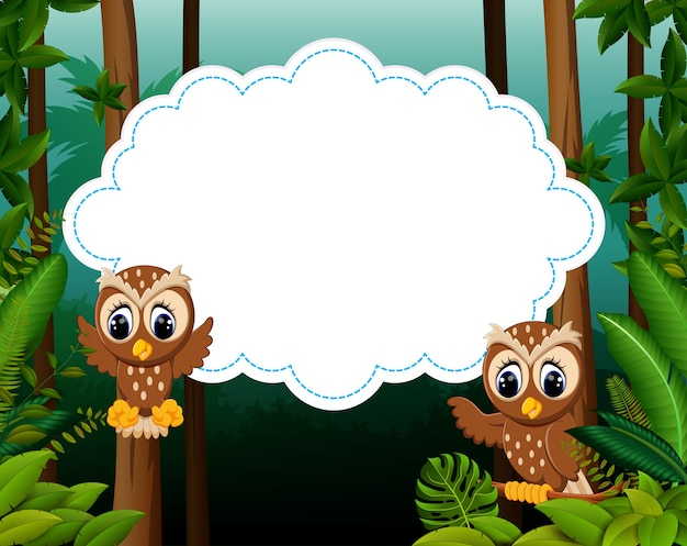 Two owl with blank paper background
