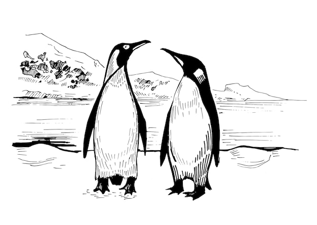 Two penguins in the arctic. hand drawn illustration.