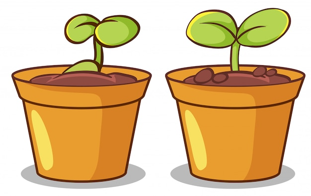 Two pots of plants