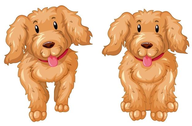 갈색 털을 가진 두 마리의 강아지
