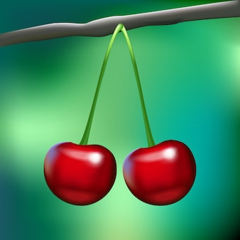 Two realistic shiny cherries on a branch