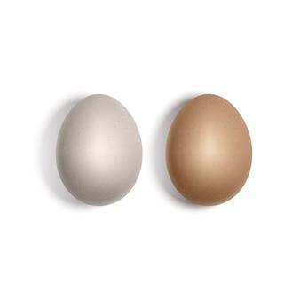 2つのリアルな白と茶色の卵。分離された鶏卵、3dイラスト