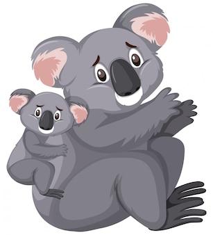 Two sad looking koalas