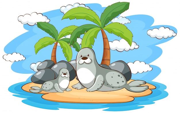 Две тюлени на острове