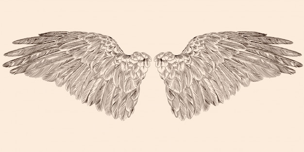 Two spread wings of an angel made of feathers isolated on a beige background.