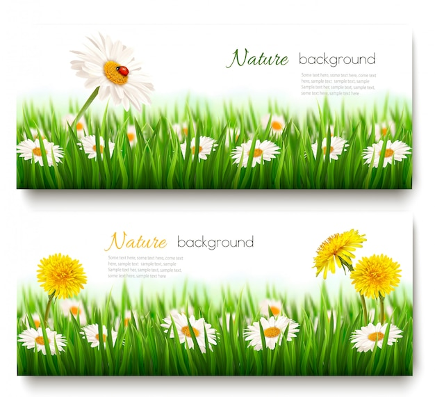 Two summer nature banners with green lgrass and flowers vector