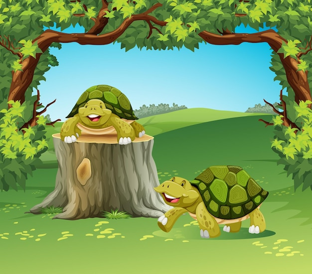 Two turtles in the field