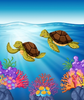 Two turtles swimming under the sea