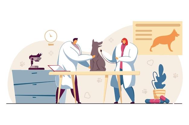 동물 병원에서 개를 검사하는 두 수의사. 평면 벡터 일러스트 레이 션. 애완 동물을 돌보는 사무실의 의사들은 의료 지원을 제공합니다. 동물, 애완 동물, 의료, 수의학 개념