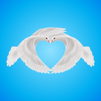 Two white doves makes form the shape of the heart