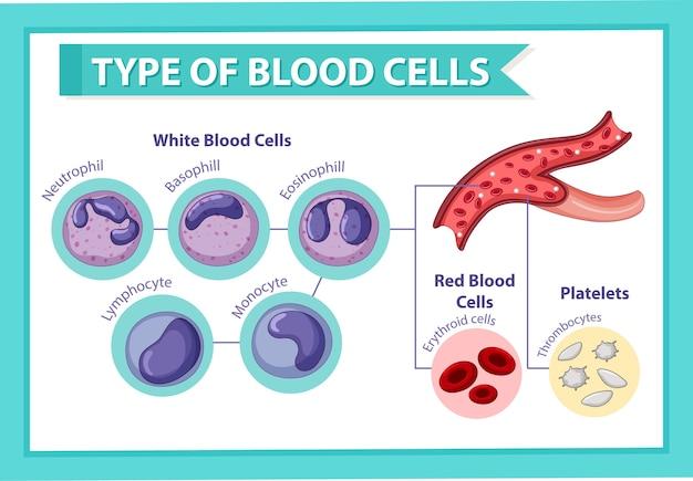 혈액 세포의 유형