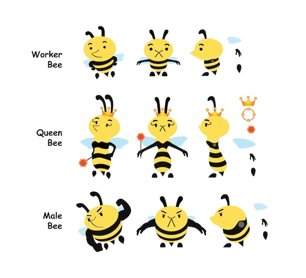 Types of bee stages  worker bee  queen bee  male bee