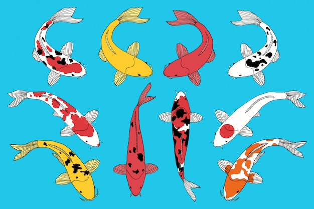 Types of koi fishes